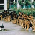 رفتارهای جالب حیوانات