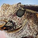 تصاویر ماکرو از حشرات