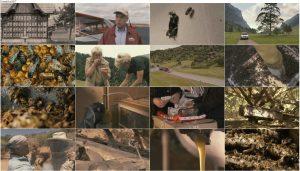 دانلود مستند فراتر از عسل با دوبله فارسی