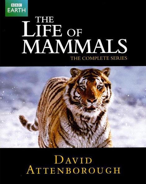 دانلود دوبله فارسی مستند The Life of Mammals 2002