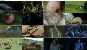The Life of Mammals 2002 E01 A Winning Design