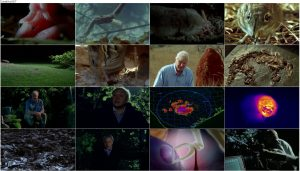 The Life of Mammals 2002 E02 Insect Hunters