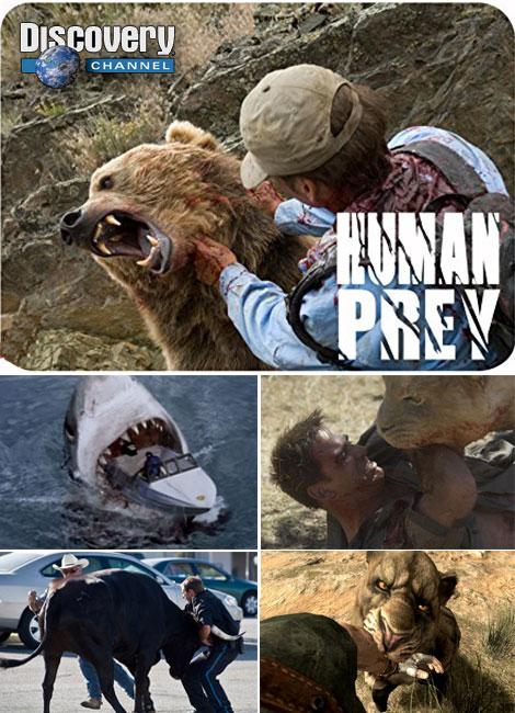 دانلود دوبله فارسی مستند انسان طعمه حیوان Human Prey