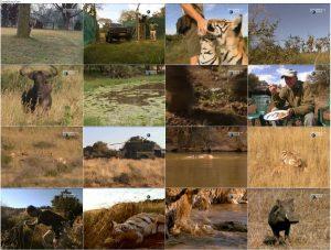 دانلود دوبله فارسی مستند زندگی با ببرها Living with Tigers 2003