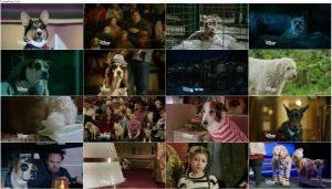 دانلود دوبله فارسی فیلم ستاره پاپ Pup Star 2016 720p, دانلود فیلم Pup Star 2016 BluRay دوبله فارسی, دانلود فیلم ستاره پاپ Pup Star 2016 1080p, ستاره پاپ