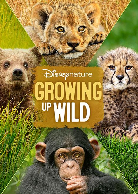 دانلود مستند Growing Up Wild 2016, دوبله فارسی مستند دانلود مستند Growing Up Wild 2016, دانلود دانلود مستند Growing Up Wild 2016 1080p, مستند حیات وحش