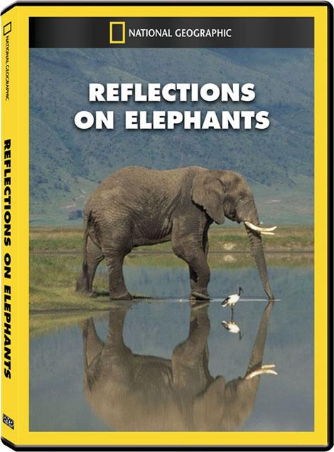 دانلود دوبله فارسی مستند فیل ها Reflections On Elephants 1994 1080p, مستند Reflections On Elephants 1994 720p دوبله فارسی, مستند نشنال جئوگرافیک, فیل ها