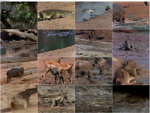 دانلود دوبله فارسی مستند The Last Feast of the Crocodiles 1996