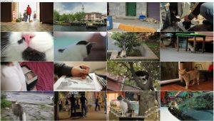 دانلود مستند گربه با دوبله فارسی Kedi 2016