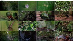 دانلود دوبله فارسی مستند باگز: ماجراجویی در جنگل های بارانی