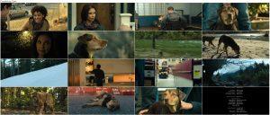 دانلود دوبله فارسی فیلم مسیر بازگشت یک سگ به خانه A Dog's Way Home 2019