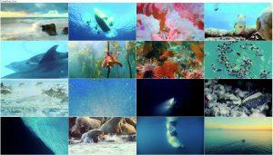 دانلود دوبله فارسی مستند اقیانوس ها: سیاره آبی ما Oceans: Our Blue Planet 2018