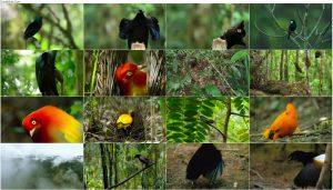 دانلود مستند رقص با پرندگان Dancing with the Birds 2019