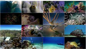 دانلود مستند شگفتی های دریا Wonders of the Sea 2017