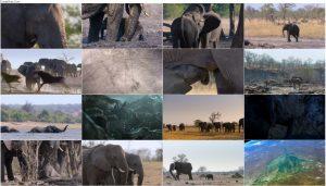 دانلود مستند فیل Elephant 2020