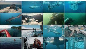اورکا در مقابل سفید عظیم Orca vs Great White 2021