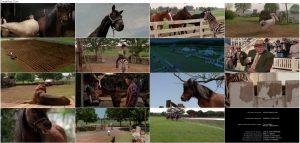 دانلود فیلم راه راه Racing Stripes 2005